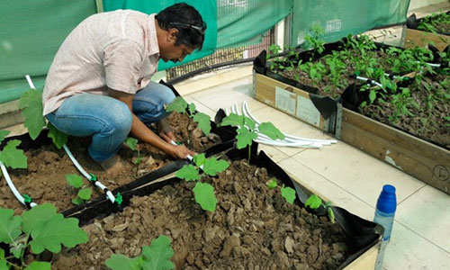 Conserving each drop of water: Drip Irrigation